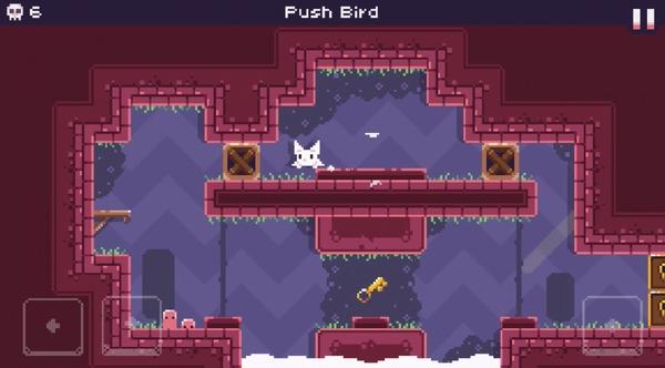 Cat Bird!6