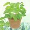 植物ゲームアプリ